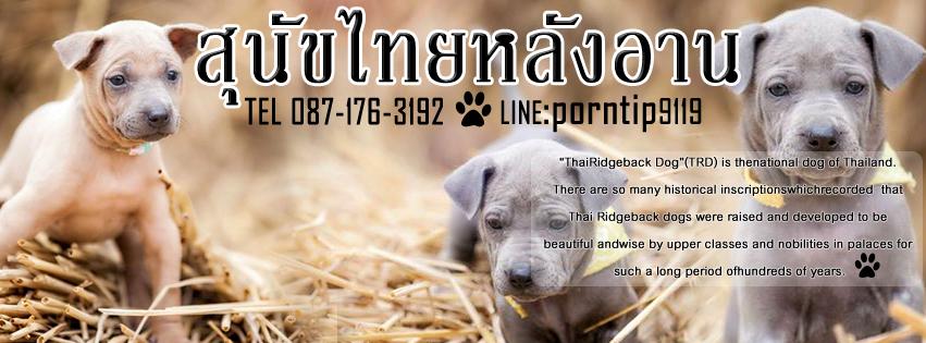 ปกเพจ  สุนัขไทยหลังอาน หมาหลังอาน๑