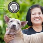 สุนัขไทยหลังอาน ขายสุนัขไทยหลังอาน   ลูกสุนัขไทยหลังอาน พ่อพันธุ์แม่พันธุ์net-0296