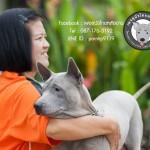 สุนัขไทยหลังอาน ขายสุนัขไทยหลังอาน   ลูกสุนัขไทยหลังอาน พ่อพันธุ์แม่พันธุ์net-0323