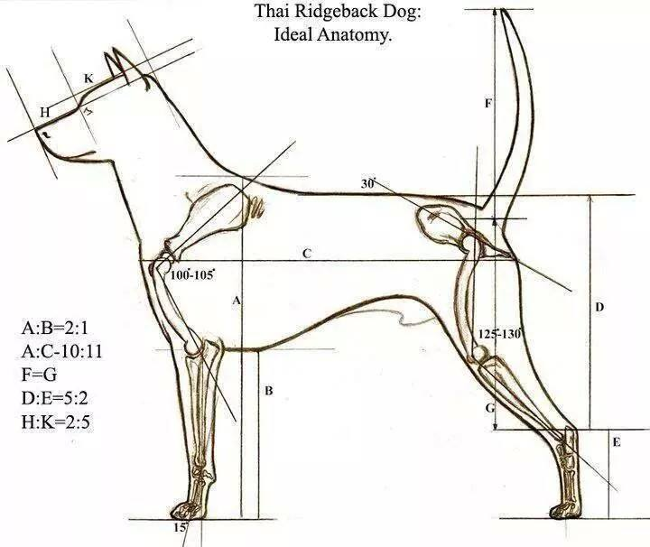 สุนัขไทยหลังอาน ขายสุนัขไทยหลังอาน   ลูกสุนัขไทยหลังอาน10704149_10152289037416431_1521582690918301395_n