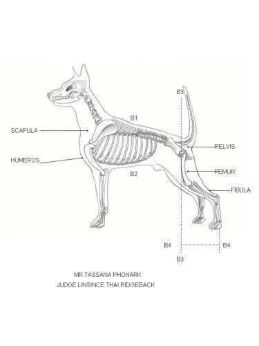 หมาหลังอานสวย,นิสัยหมาหลังอาน ,วัคซีนสุนัข,แนะนำฟาร์มสุนัข ,ราคาหมาหลังอาน,
