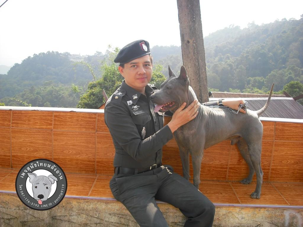 เชียงรายเชียงใหม่สุนัขไทยหลังอาน