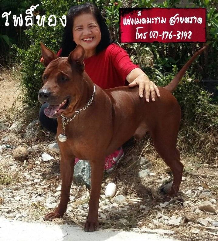 แดงเม็ดมะขามเชียงรายเชียงใหม่นนทบุรีระยองจันทบุรี