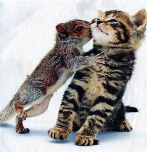 แมว จับหนู