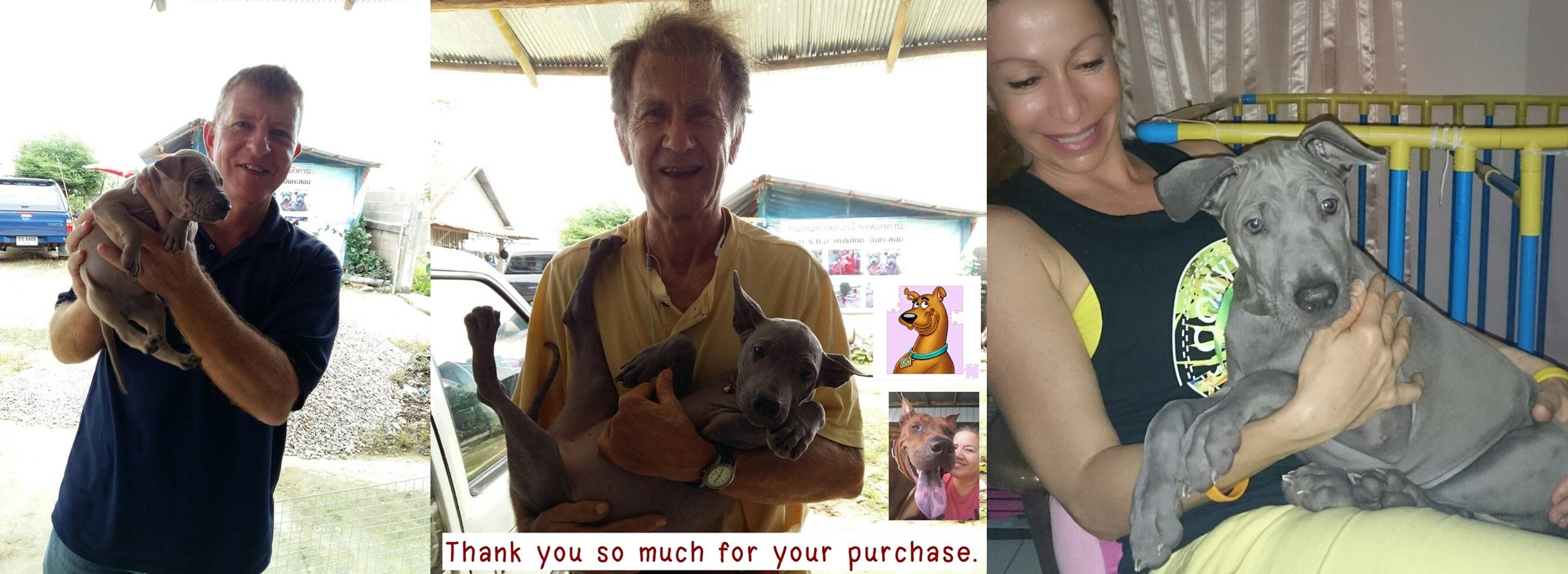 แม่สายเชียงรายไทยหลังอานซื้อขายฟาร์ม