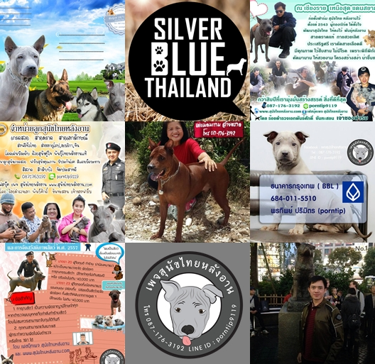 ๖ พรีเซนไทยหลังอานหมาไทยCopy of 300kbไทยหลังอานเชียงราย@-tile