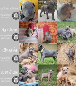 ๗ลูกไทยหลังอานขายฟาร์มไทย