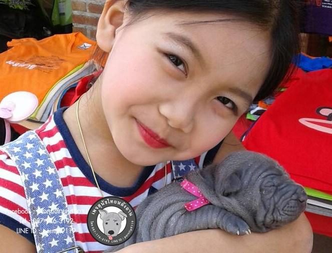 2สุนัขไทยหลังอาน ขายสุนัขไทยหลังอาน   ลูกสุนัขไทยหลังอาน343