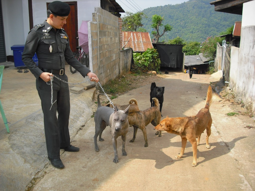 ,ส่งมอบสุนัขทางเครื่องบิน,ส่งสุนัขไทยหลังอาน  ไปอิสาน,ส่งสุนัขกรุงเทพ,มุมขาสุนัขไทยหลังอาน  ,เส้นหลังสุนัขไทยหลังอาน  ,ขาหลังสุนัขไทยหลังอาน