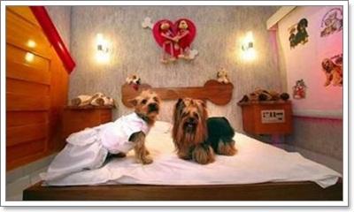 perros-traviesos