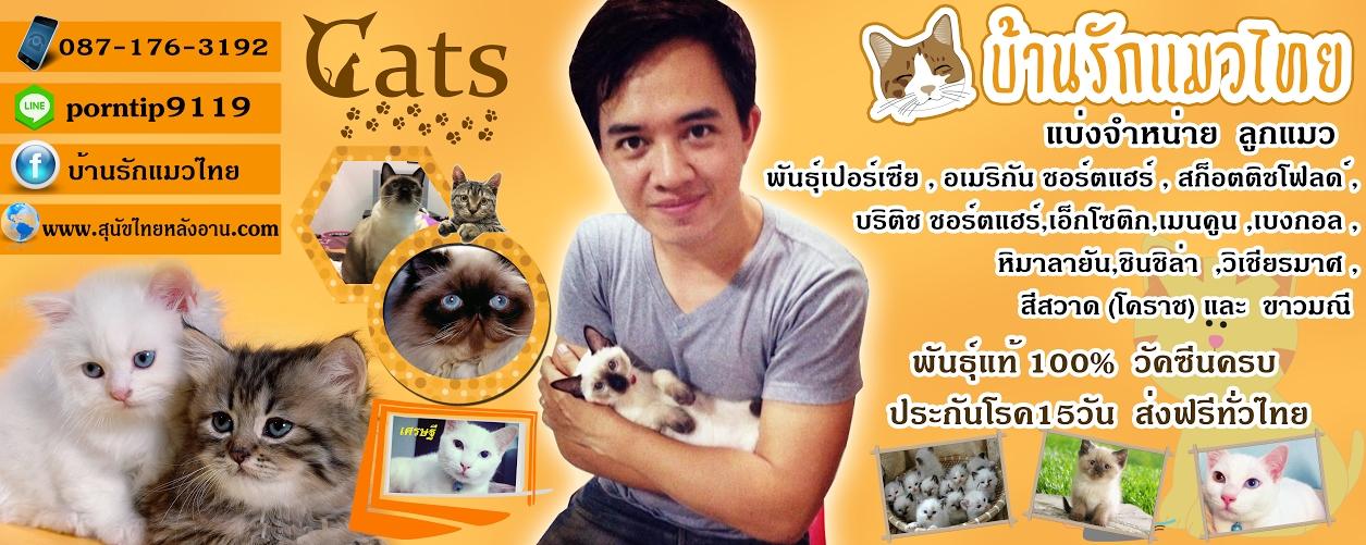บ้านรักแมวไทยปกเพจ