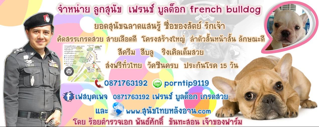 ส่งฟรีทั่วไทย ขายลูกสุนัข เฟรนช์ บูลด็อก 0871763192 Line ID:porntip9119 วัคซีนครบ ประกันโรค15วัน