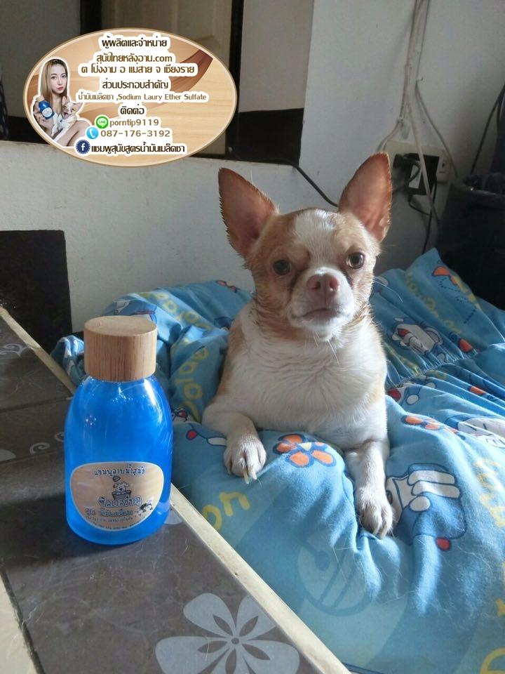 แชมพูสุนัข สูตร น้ำมันเมล็ดชา 12466993_n