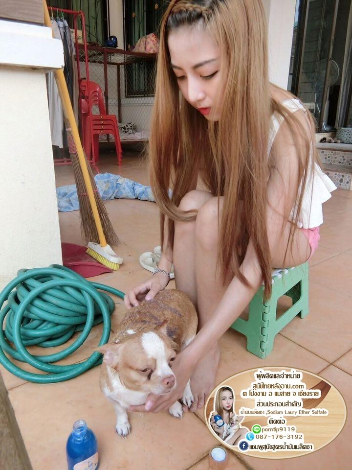 แชมพูสุนัข สูตร น้ำมันเมล็ดชา 205