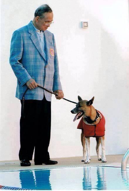 คุณทองแดง สุนัขทรงเลี้ยง255_n