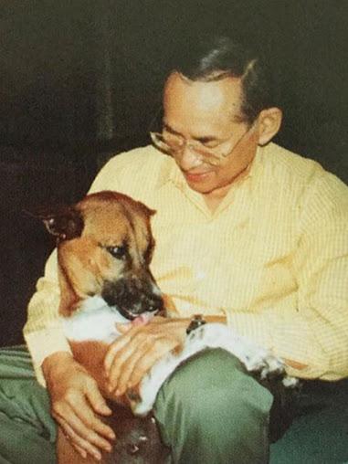 รวมภาพคุณทองแดงสุนัขทรงเลี้ยง(1)