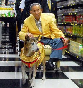 คุณทองแดง สุนัขทรงเลี้ยง12191