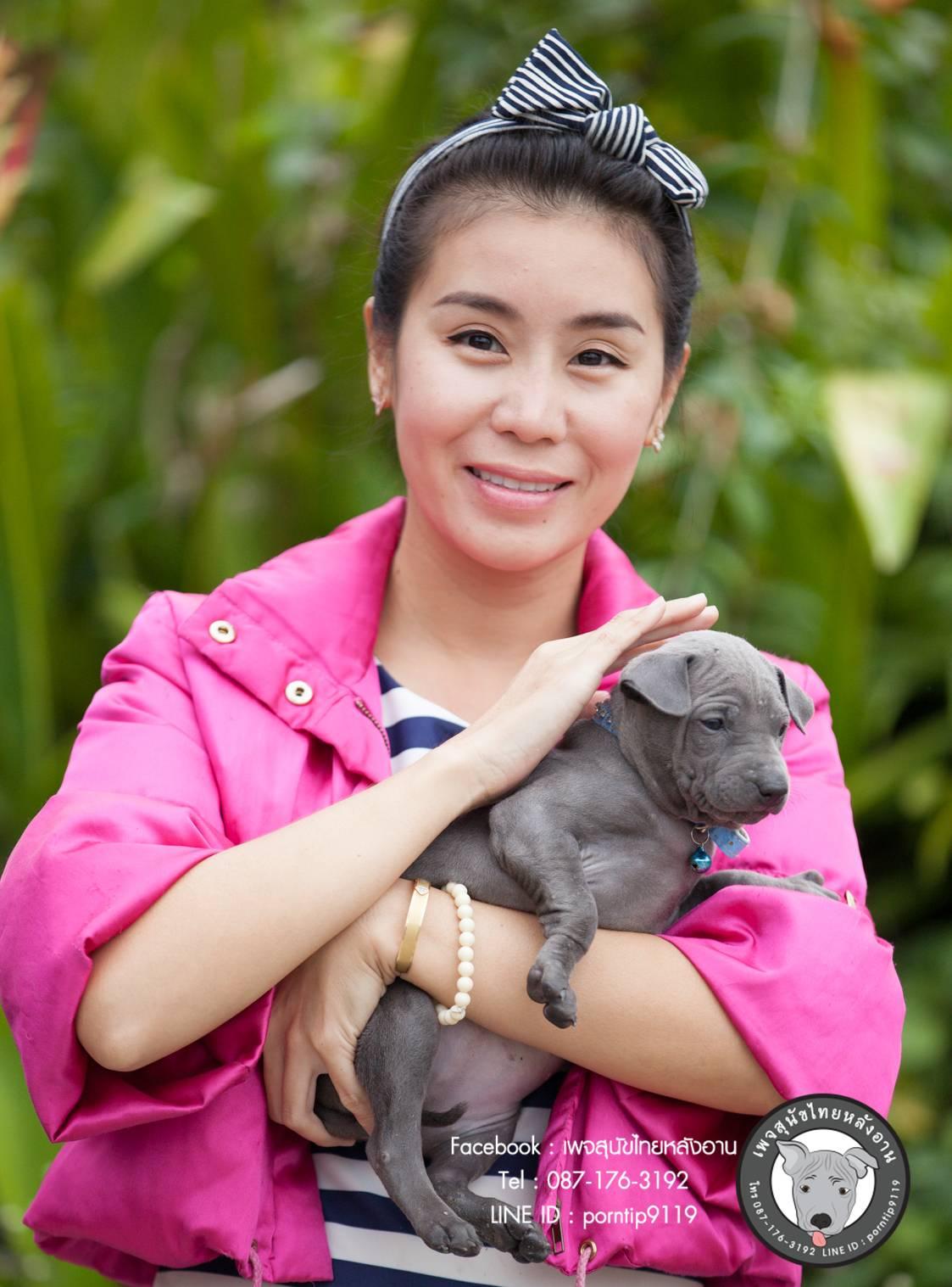สุนัขไทยหลังอาน ขายสุนัขไทยหลังอาน   ลูกสุนัขไทยหลังอาน net-0341