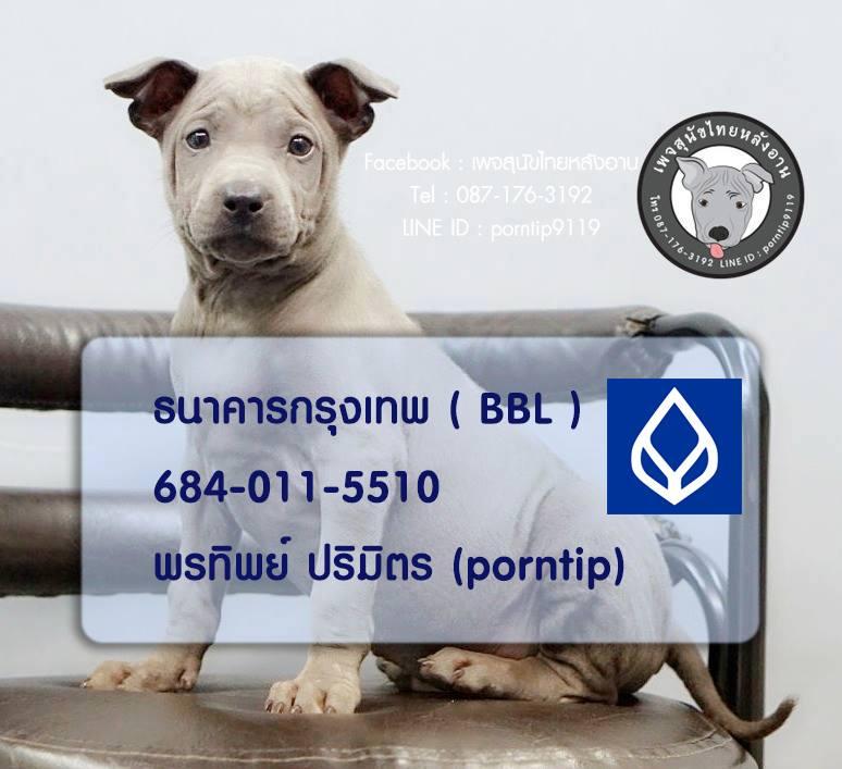สุนัขไทยหลังอานดอทคอม