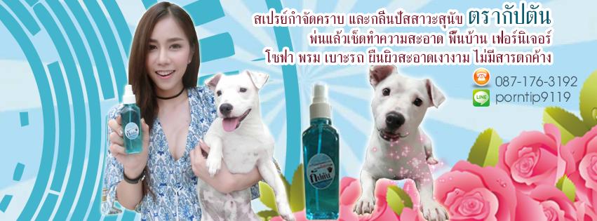 กำจัดกลิ่นฉี่สุนัขหมาปัสสาวะ39 1