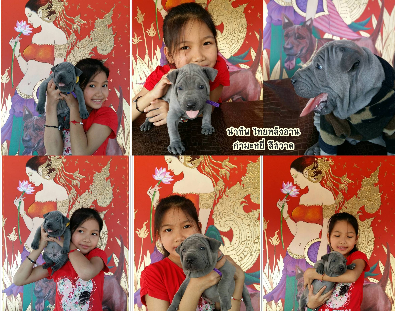 catsไทยหลังอาน เชียงใหม่ซื้อขายเชียงรายแพร่น่านแม่ฮ่องสอน